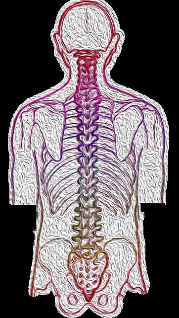 neurodinamia