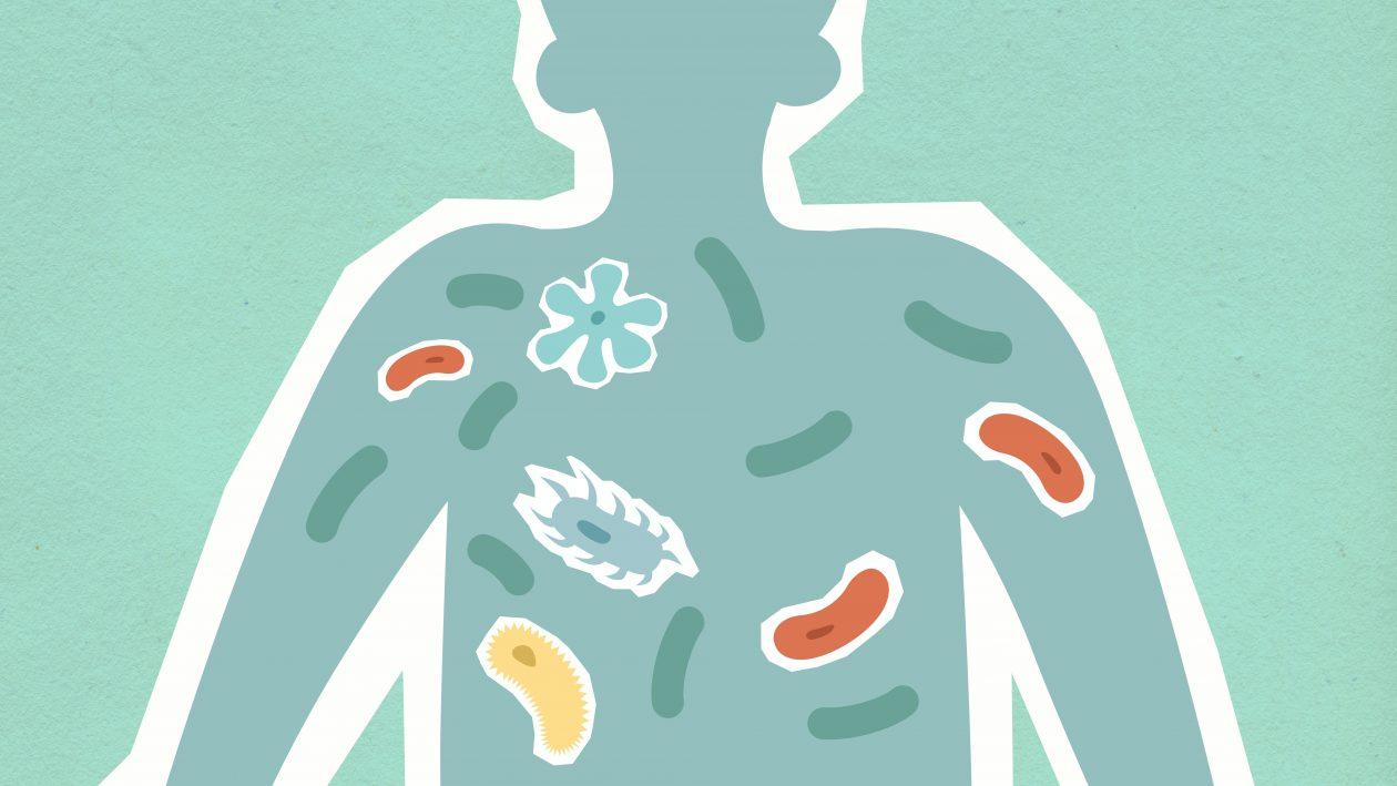 Microbiota: la importancia de la alimentación